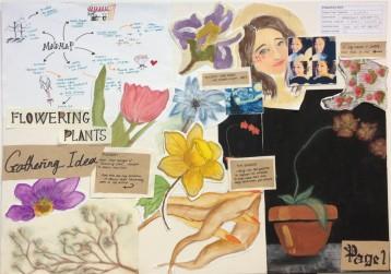Flowering Plants Board 1
