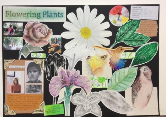 Flowering Plants 2 Board 1